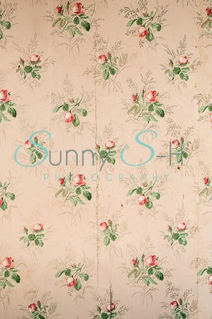 Cream Flower Rose Wallpaper