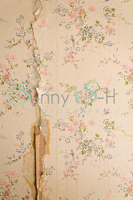 Cream Flower Wallpaper