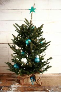 Teal Spruce Tree
