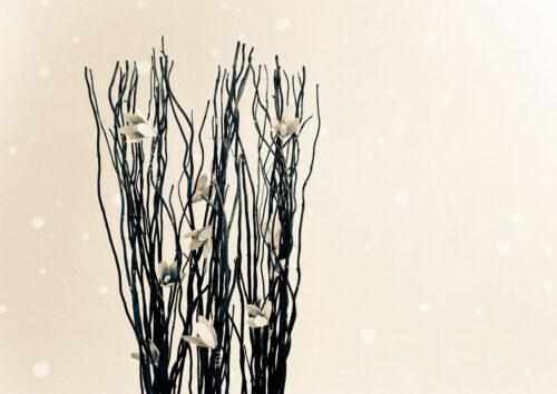 Creme Winter