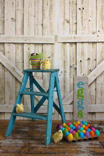 Chicks and Eggs Easter Photography Backdrop