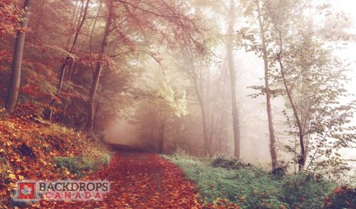 Autumn Path Photography Backdrop