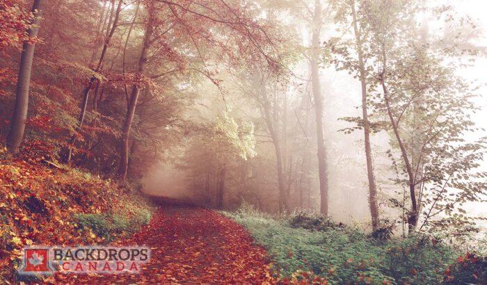 Autumn Path Photography Backdrop