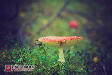Mushroom Close Up Photography Backdrop