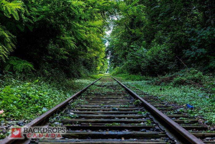 Train Tracks through greenery Photography Backdrop