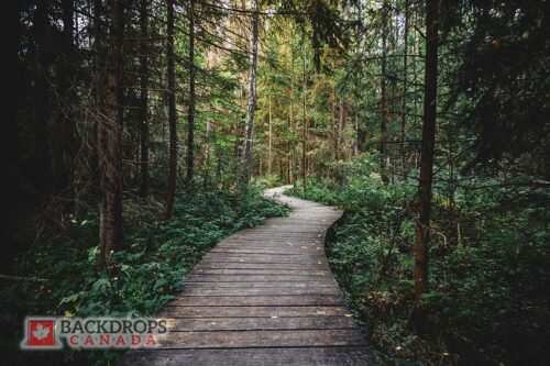 Wooden Pathway through Forest Photography Backdrop