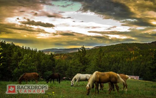 Horses Grazing in the Valley Photography Backdrop