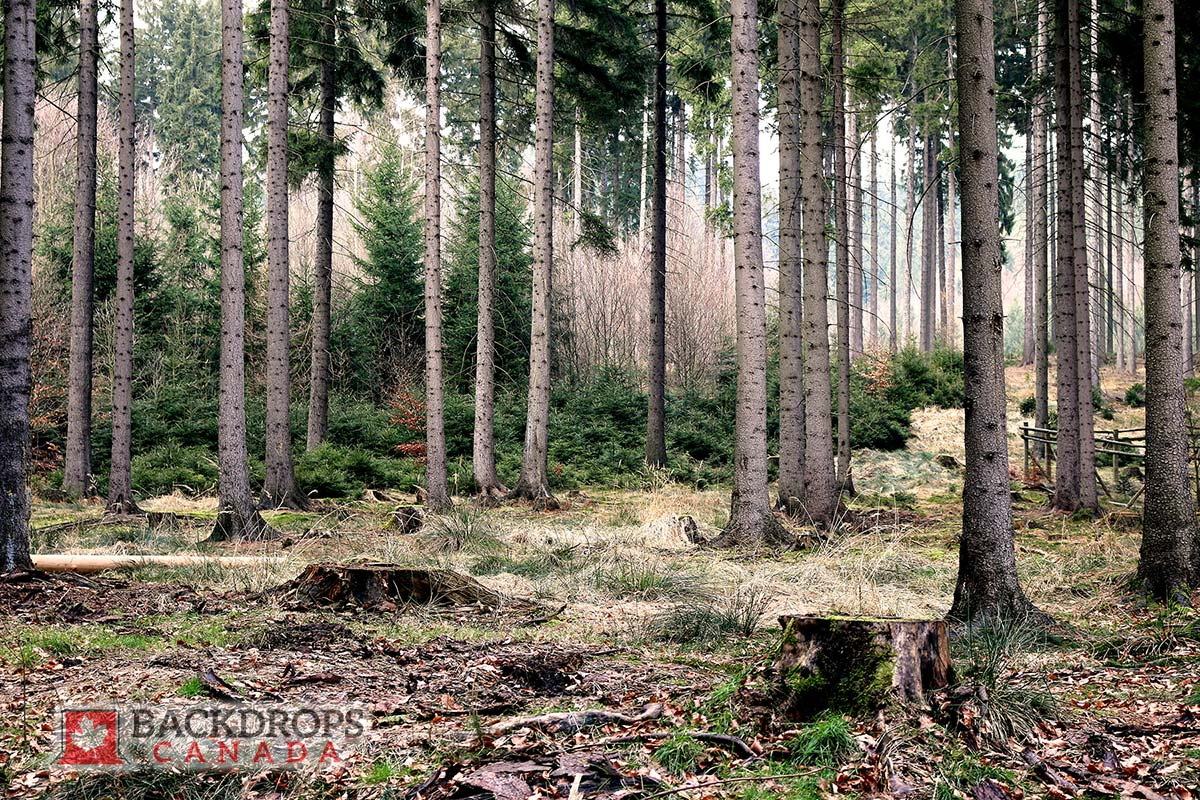 Forest Photography Backdrop