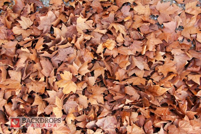 Fall Leaves Photography Backdrop