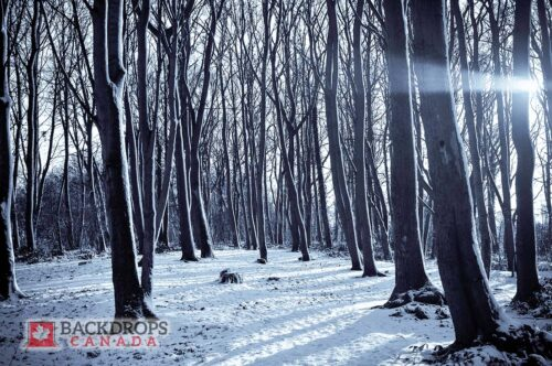 Forest in the Winter Photography Backdrop