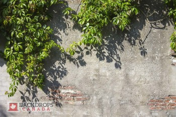 Stone Wall with Vines Photography Backdrop