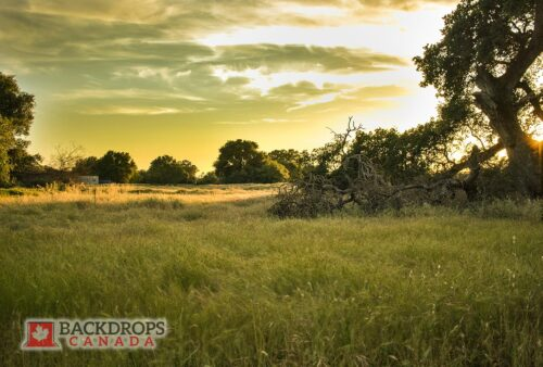 Field at Sunset Photography Backdrop