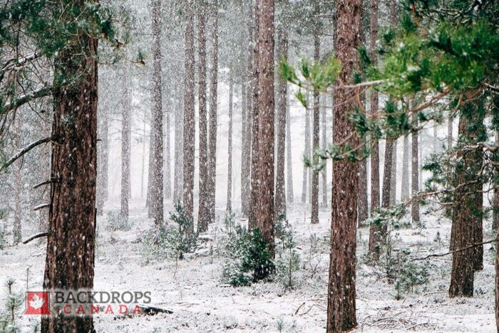 Forest in Winter Photography Backdrop
