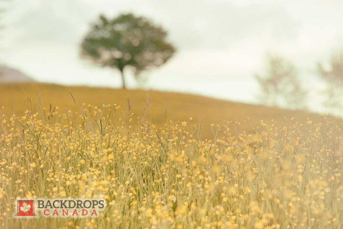 Yellow Field Photography Backdrop