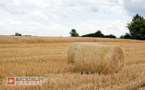 Hay Field Photography Backdrop