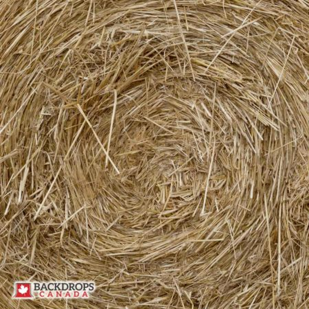 Hay Up Close 2