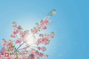 Blossoms in the Sky Photography Backdrop