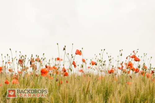 Orange Wildflowers Photography Backdrop