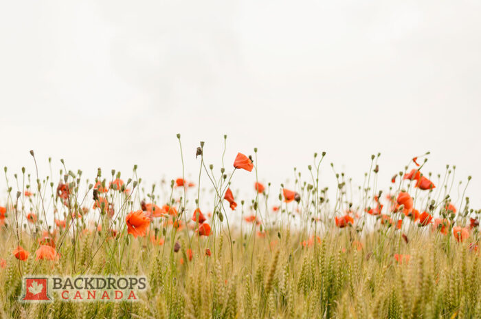 Orange Wildflowers Photography Backdrop