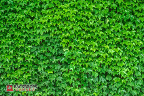 Green Ivy Photography Backdrop