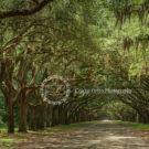 Brawny Oak Tree Photography Backdrop