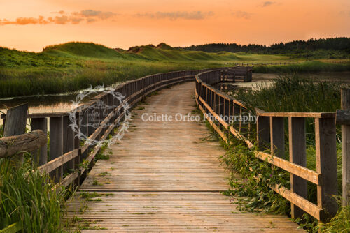 Bridge Overlooking Sand Dunes Photography Backdrop