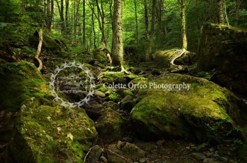 Emerald Forest Photography Backdrop