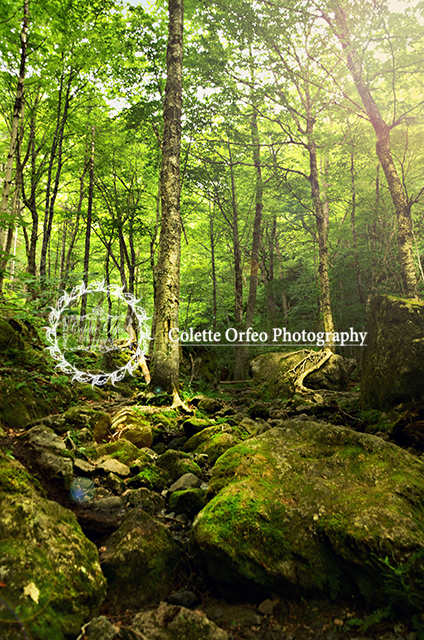 Fairytale Forest Photography Backdrop