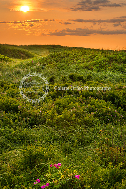 Field of Green Photography Backdrop