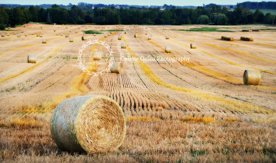 Hay Fields at Harvest Photography Backdrop