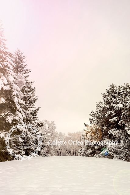 Winter Wonderland Photography Backdrop