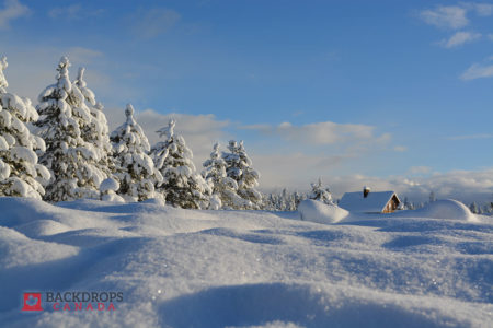 Snow Covered Field with Evergreen Trees and Tiny Cabin