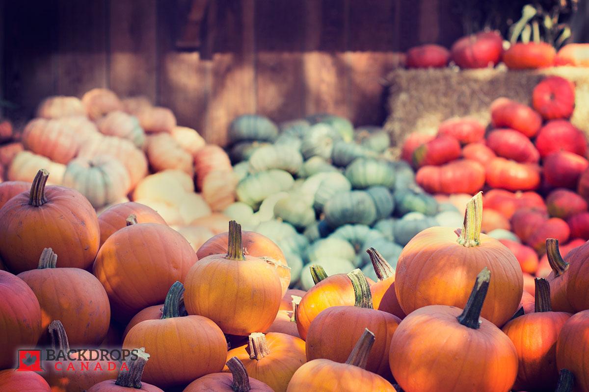 Pumpkin Photography Backdrop