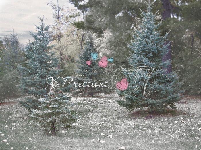 Christmas Tree Farm Backdrop