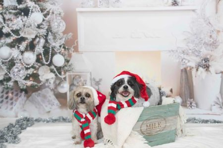 Adorable Puppies wearing Christmas Hats in front of Fireplace Backdrop
