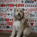 Pet Photography Valentine's Day Backdrop