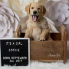 Puppy Announcement with Paper Flowers Backrop in Beige & Brown