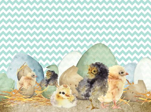 Easter Chicks just hatched Backdrop