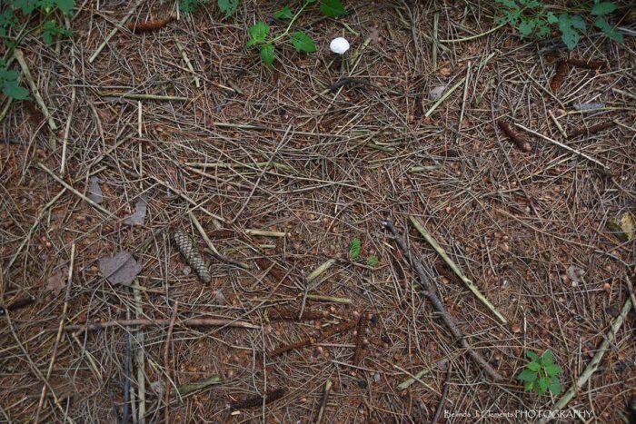 Forest Floor Floordrop