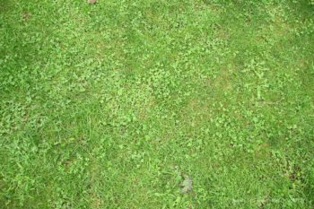 Green Grass floordrop with Clovers