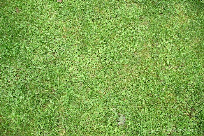 Green Grass floordrop with Clovers
