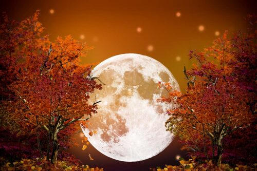 Harvest Moon Photography Backdrop