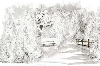 Winter Snow Covered Trees Photography Backdorp