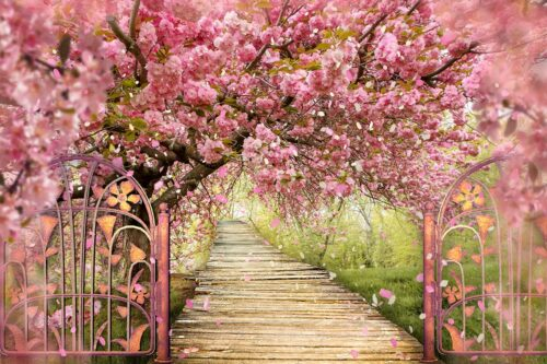 Cherry Blossoms Photography Backdrop