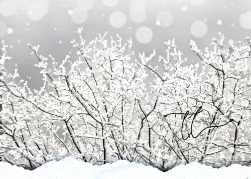 Grey Frosty Winter Backdrop