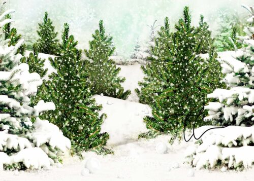 Backdrop featuring Evergreen Trees in the Snow