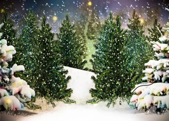 Backdrop featuring Evergreen Trees in the Snow at Dusk