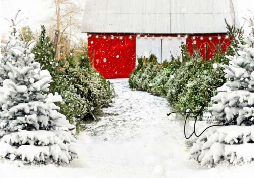 Backdrop of a snow covered tree farm