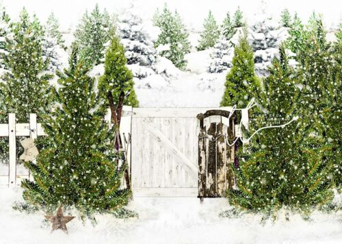 Evergreen Trees backdrop with sled against white fence