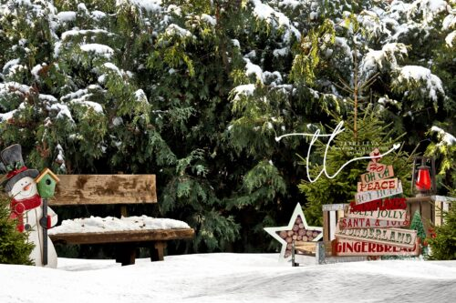 Winter Backdrop with Cedar Trees and Park Bench